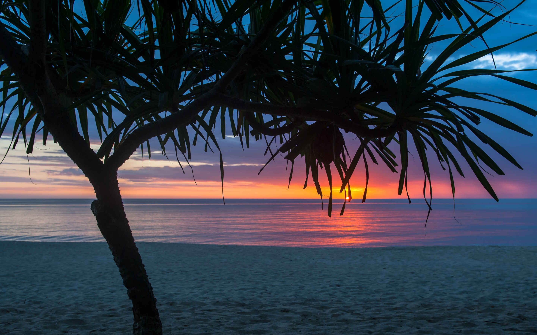 2880x1800 Tree Beach Seashore Summer Macbook Pro Retina Hd 4k