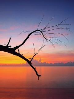 tree-branch-sunset-view-bt.jpg