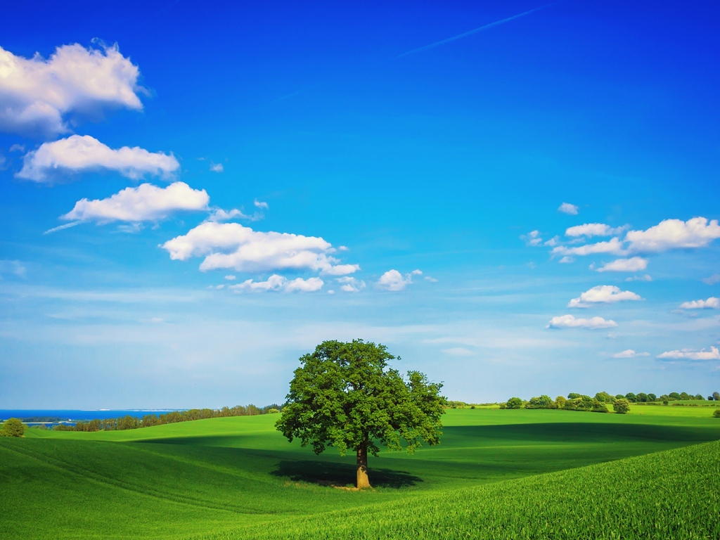 tree-field-plain-hd.jpg
