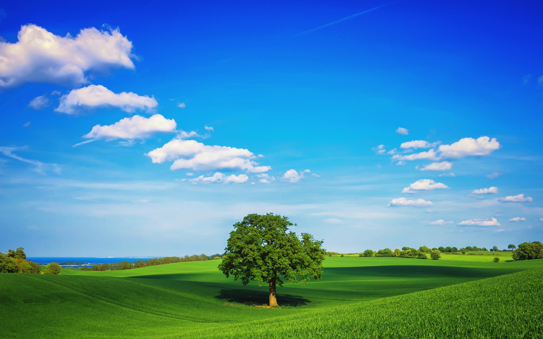 трава дерево поле  № 809765  скачать