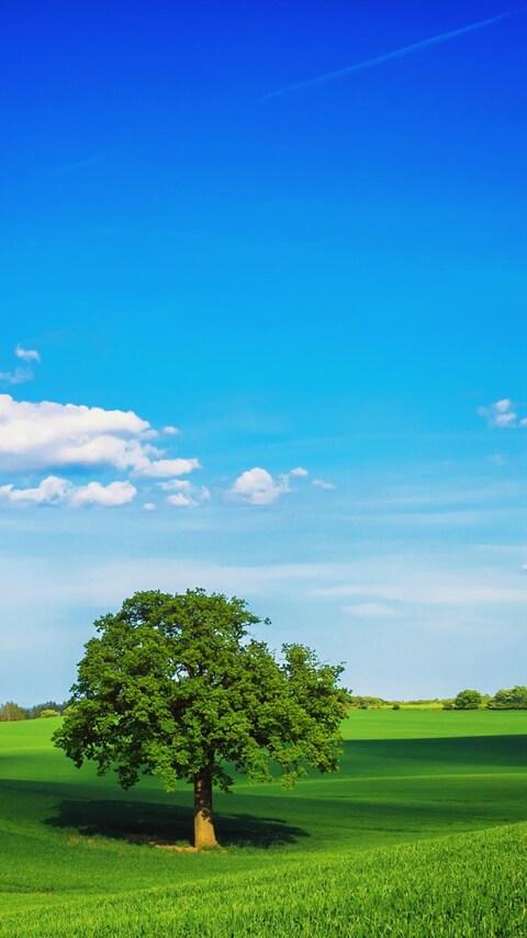 tree-field-plain-hd.jpg