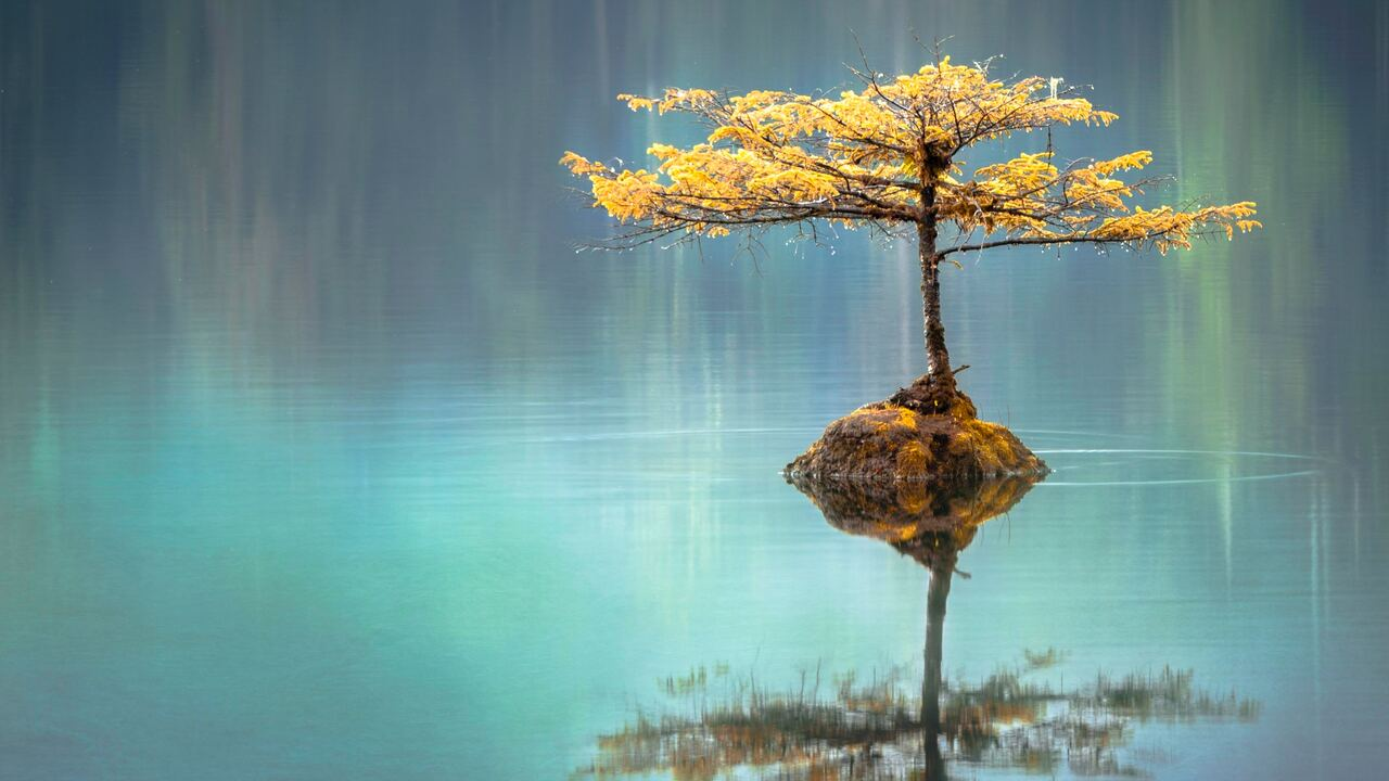 tree-in-the-middle-of-lake-y8.jpg