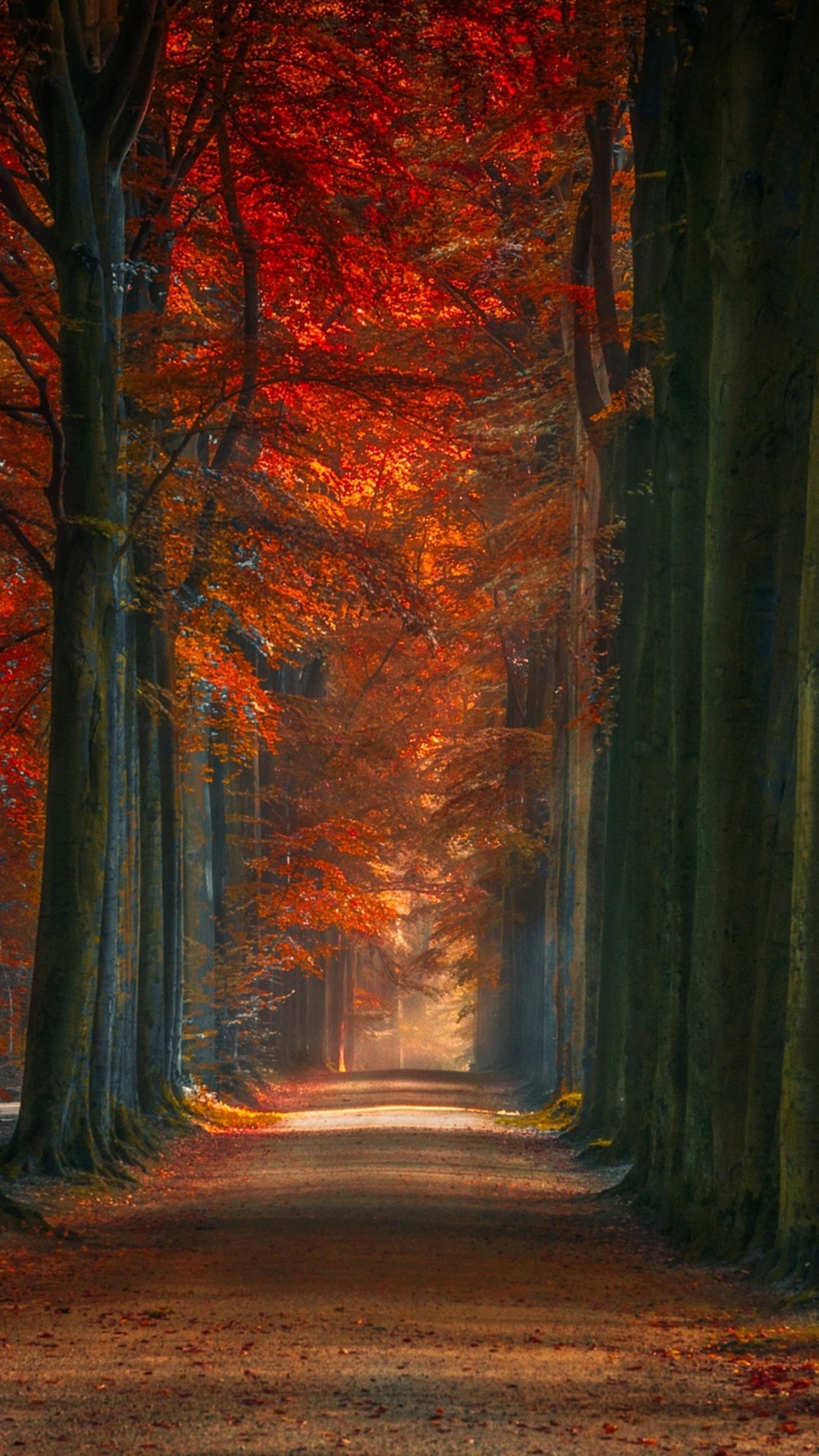tree-lined-winter-fall-alone-road-ka.jpg