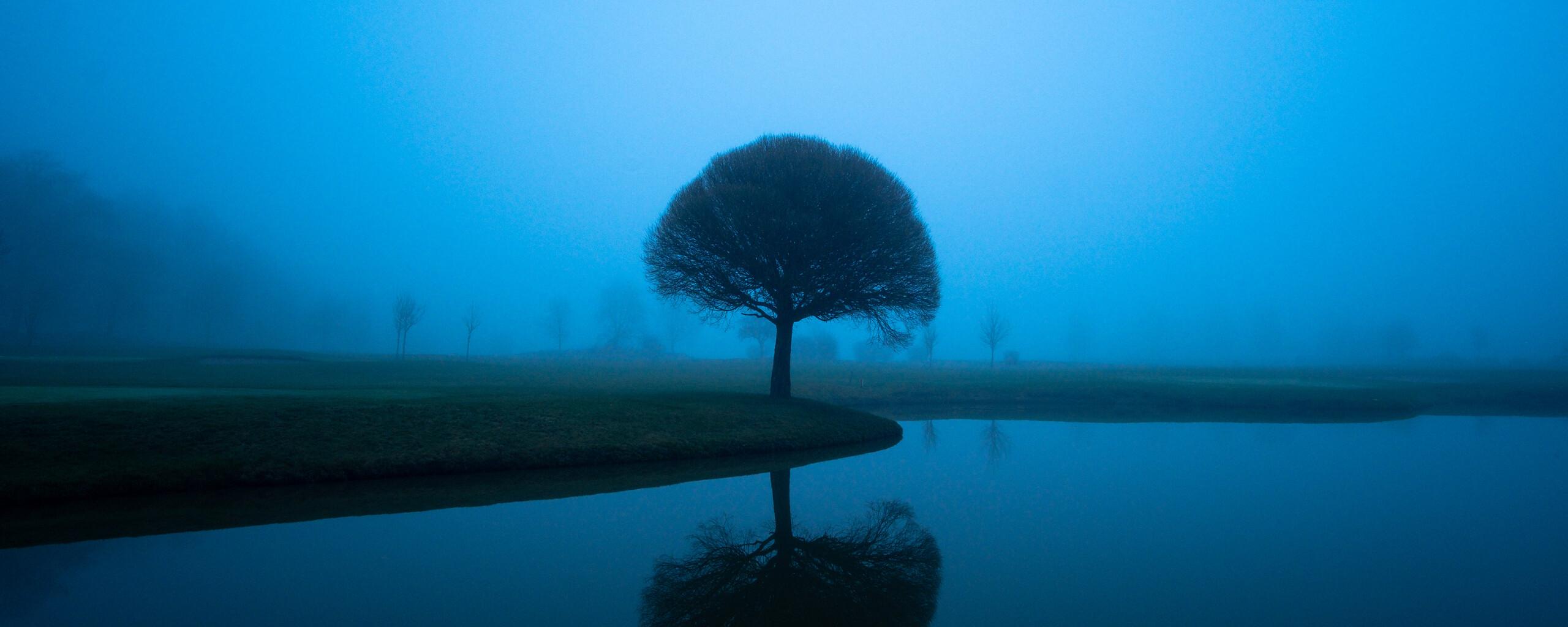 tree-mistscape-5k-ht.jpg