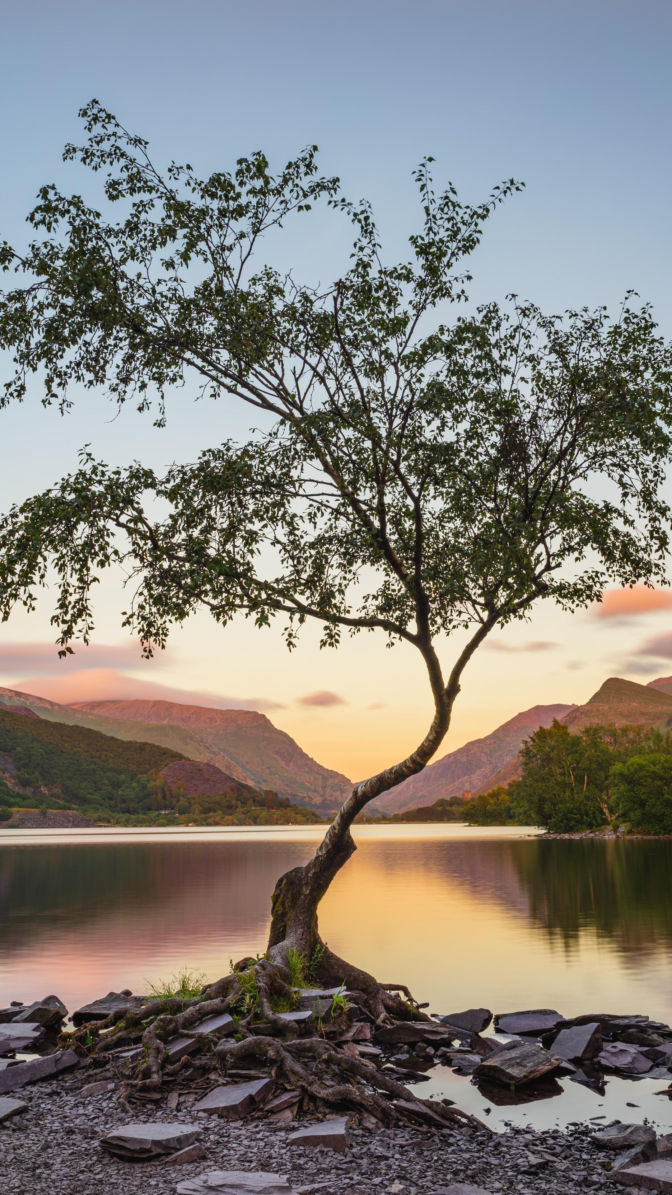 tree-near-lake-during-daytime-8k-3f.jpg