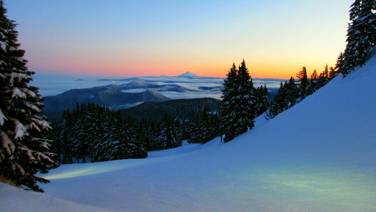 tree-plant-fir-abies-nature-outdoors-mountain-snow-qd.jpg
