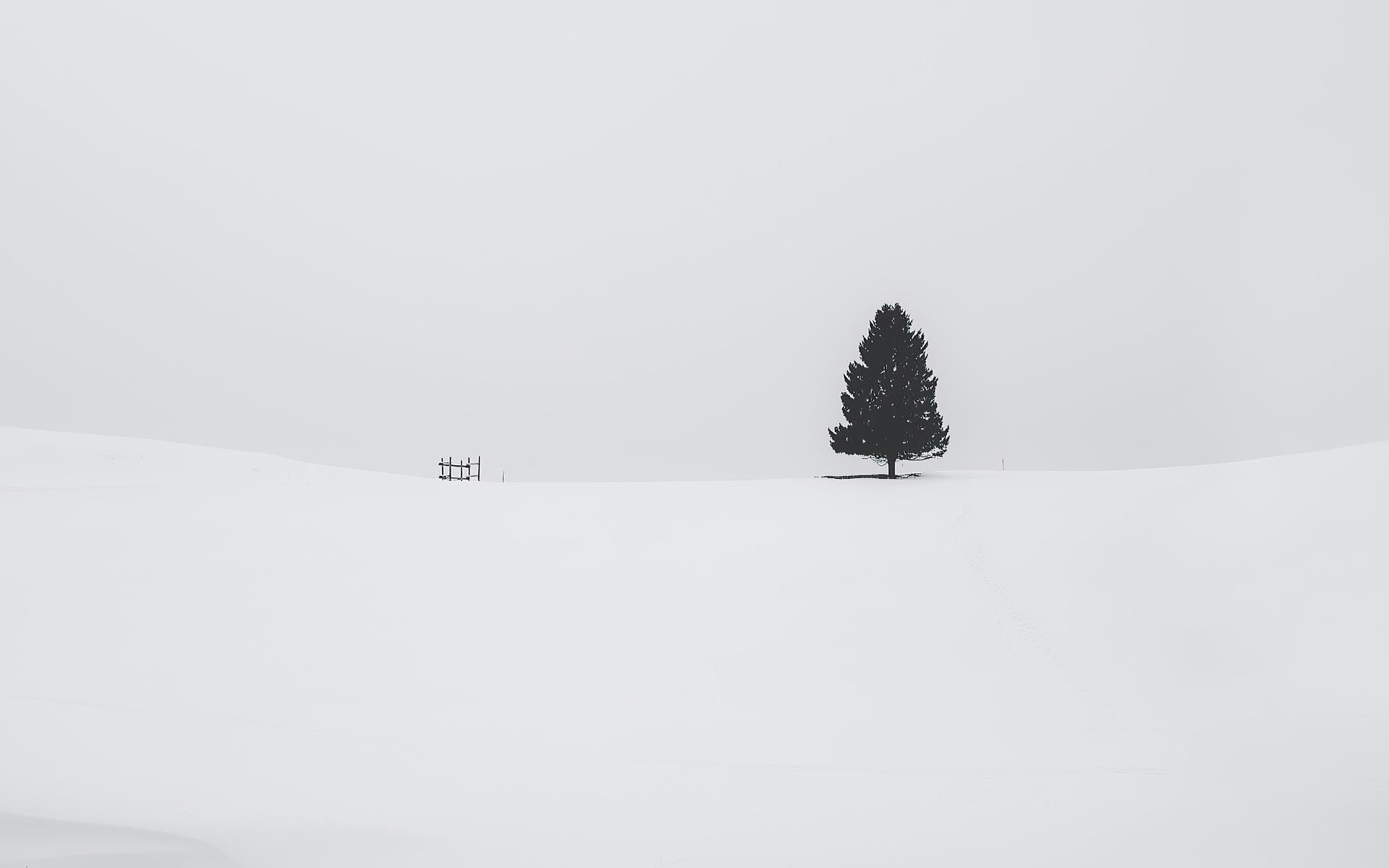 tree-snow-4k-oo.jpg