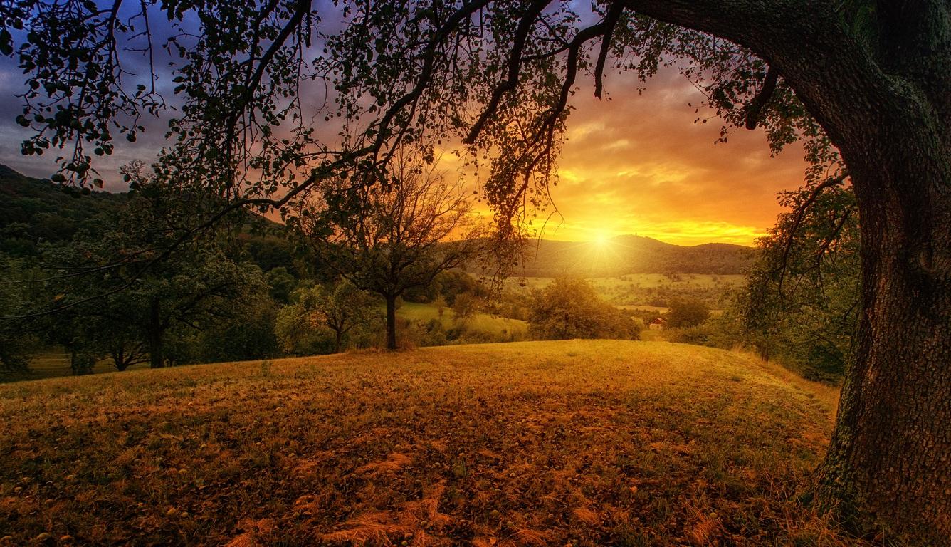tree sun aesthetic dawn landscape panorama si