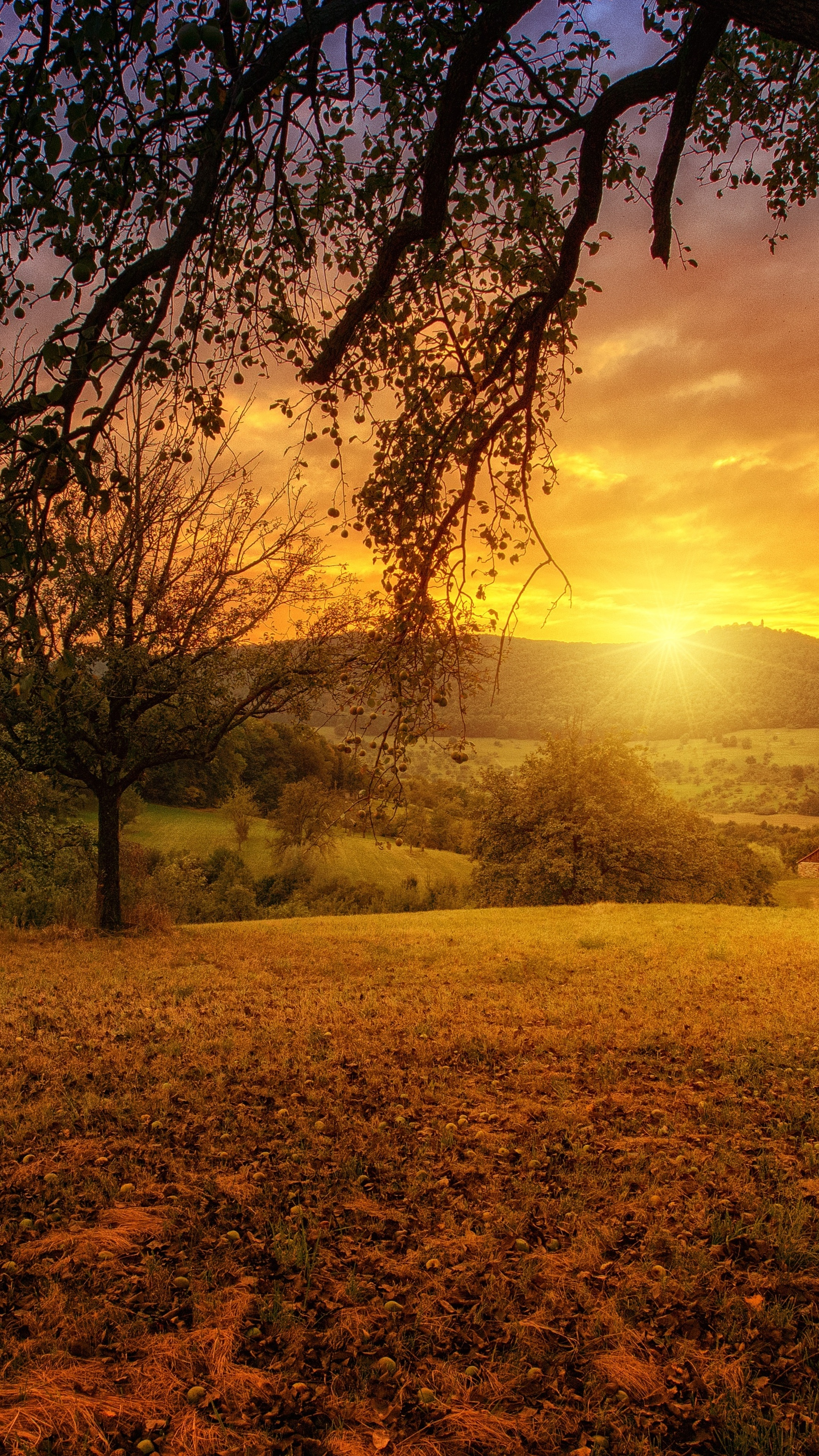 2160x3840 tree sun aesthetic dawn landscape panorama sony - Nature wallpaper aesthetic ...