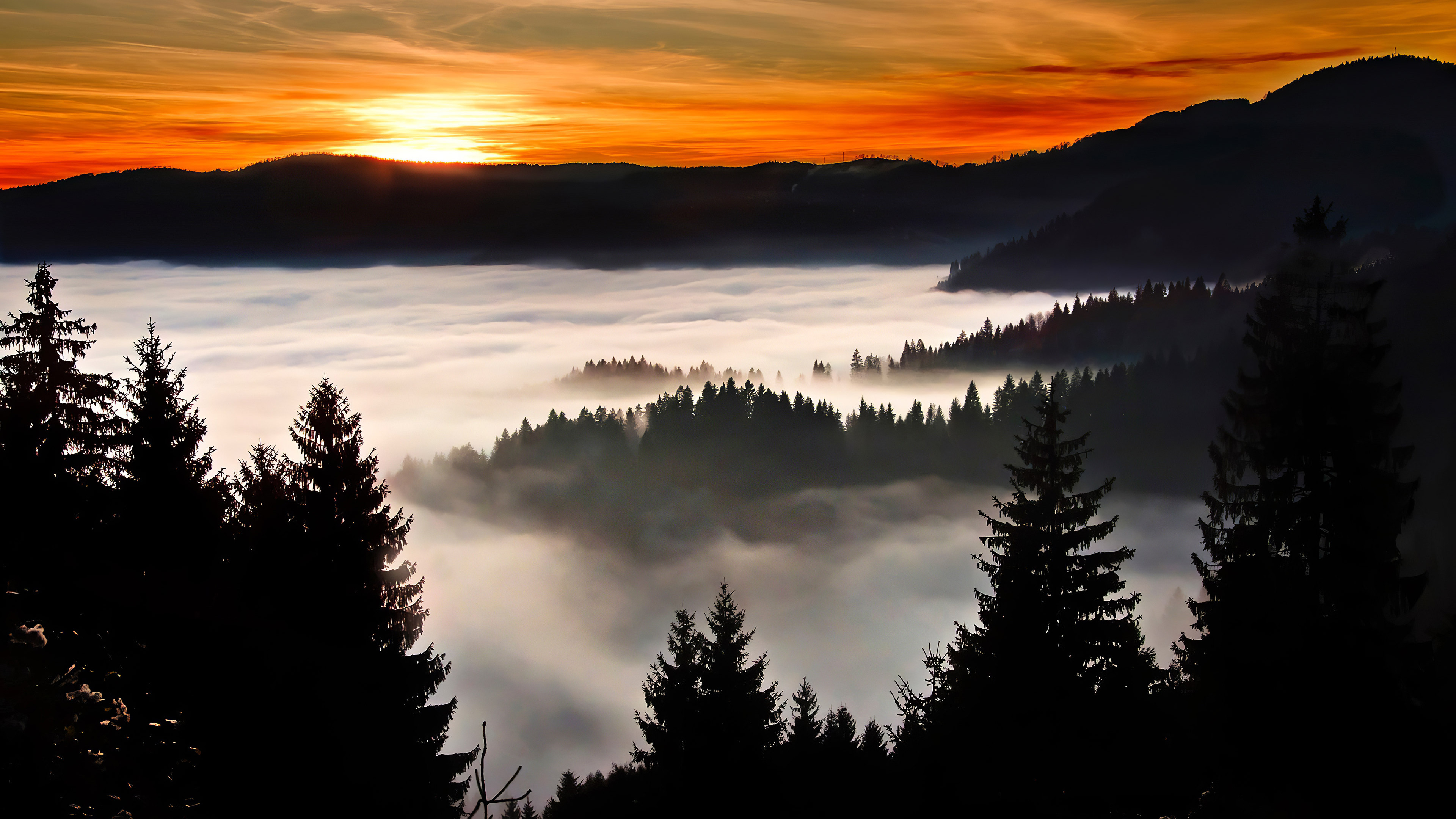 trees-covered-in-clouds-4k-v4.jpg