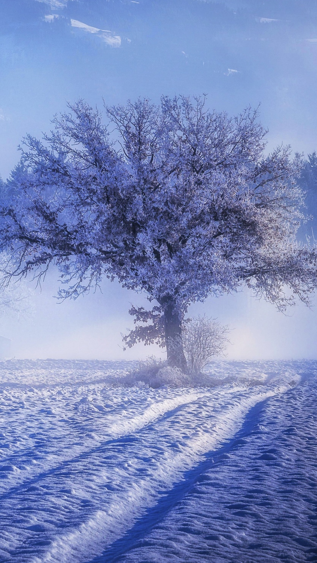 1080x1920 Trees Covered With Snow Fog Landscape Winter 4k ...