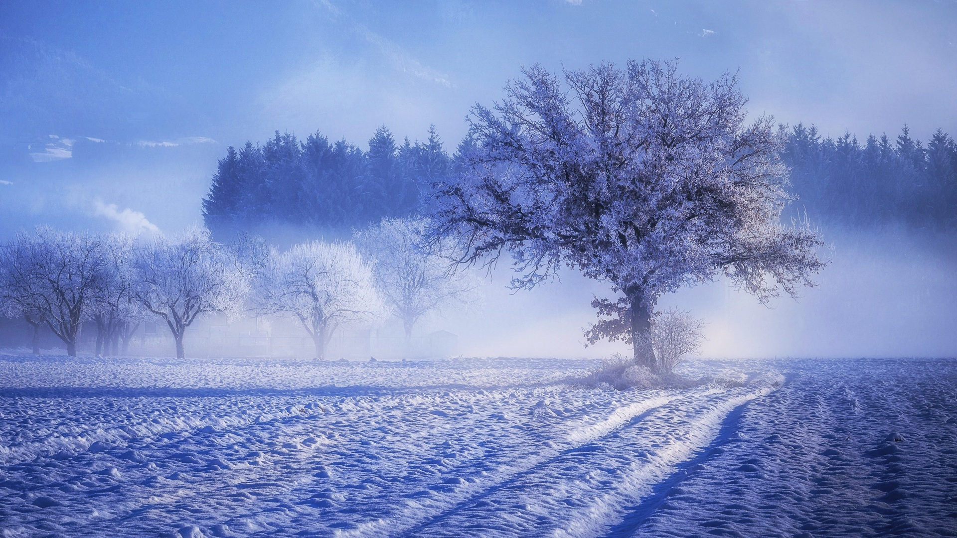 1920x1080 Trees Covered With Snow Fog Landscape Winter 4k