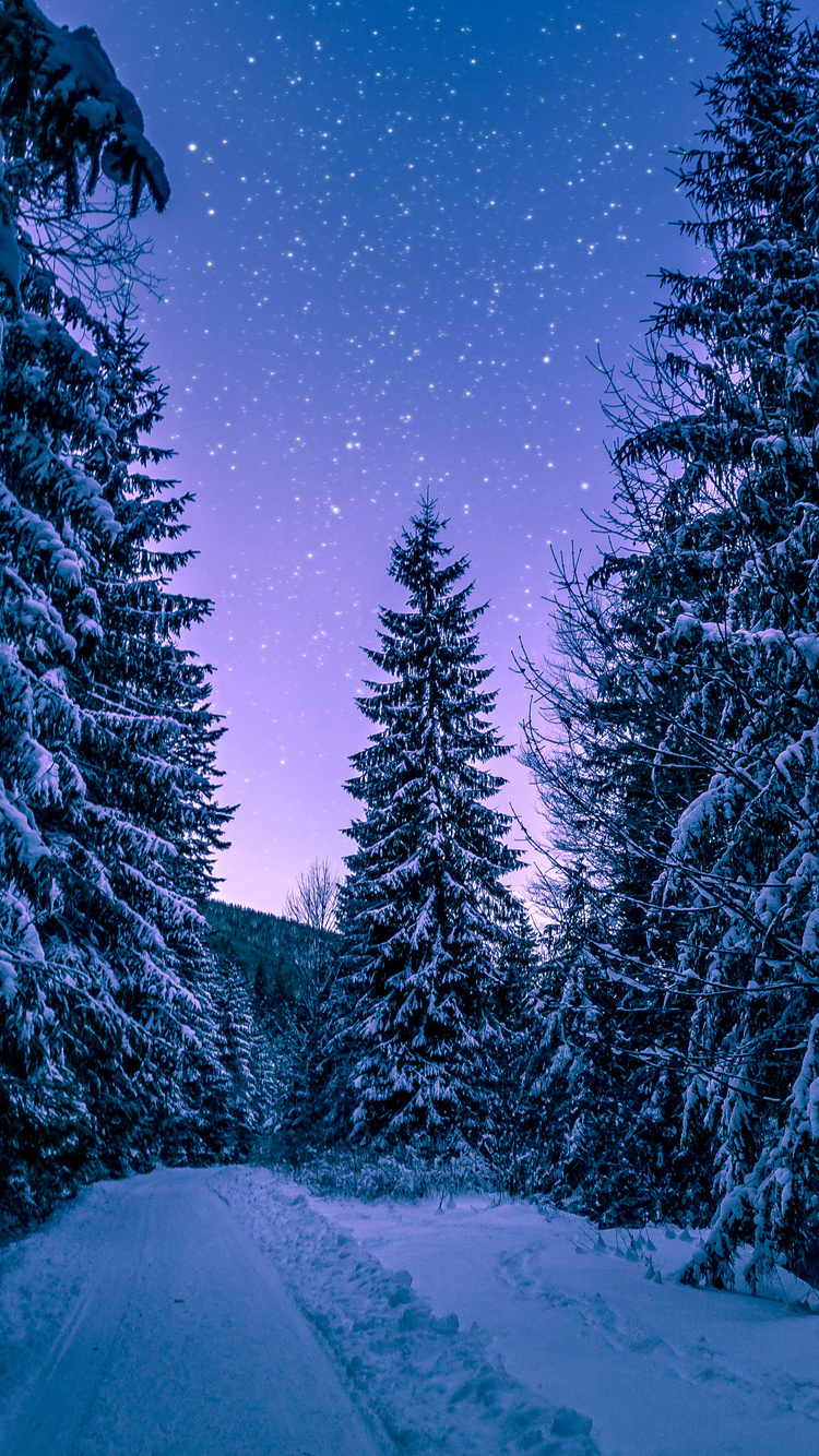 trees-covered-with-snow-freezing-forest-winter-5k-we.jpg