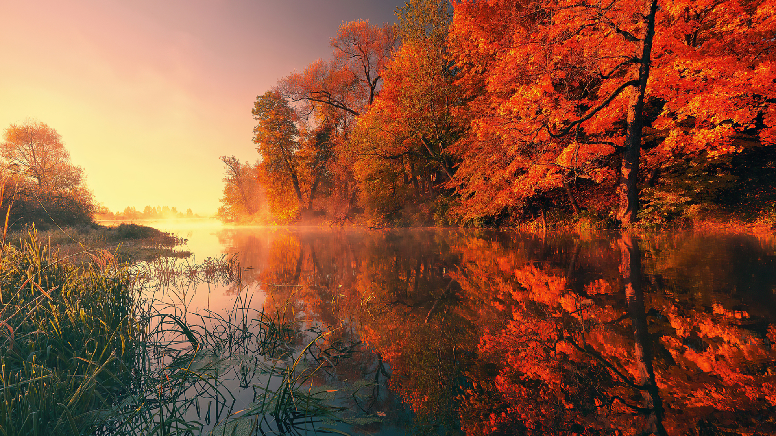 trees-fall-reflection-autumn-4k-hb.jpg