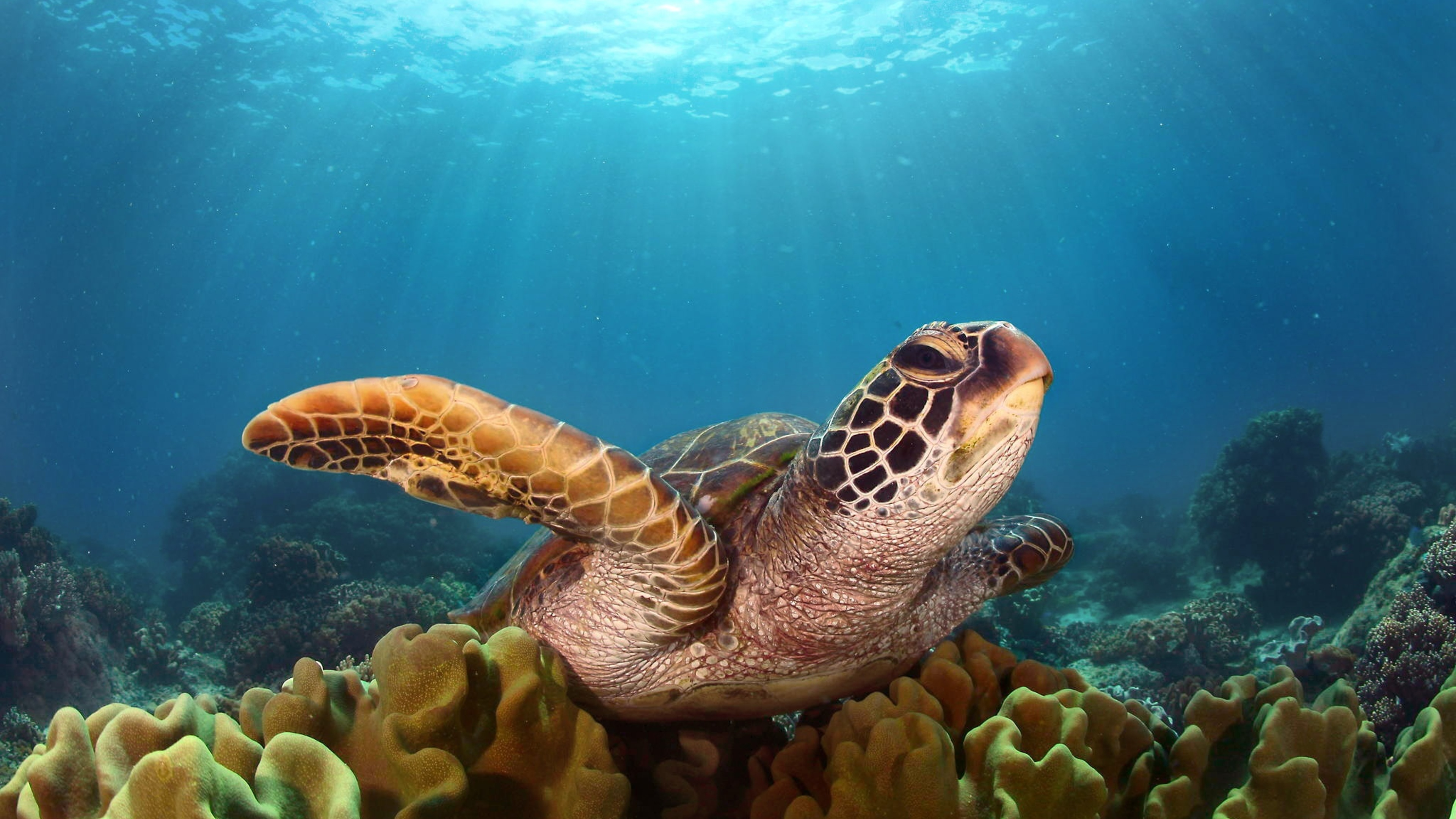 Hd Background Wallpaper 800x600: 3840x2160 Turtle Hd 4k HD 4k Wallpapers, Images