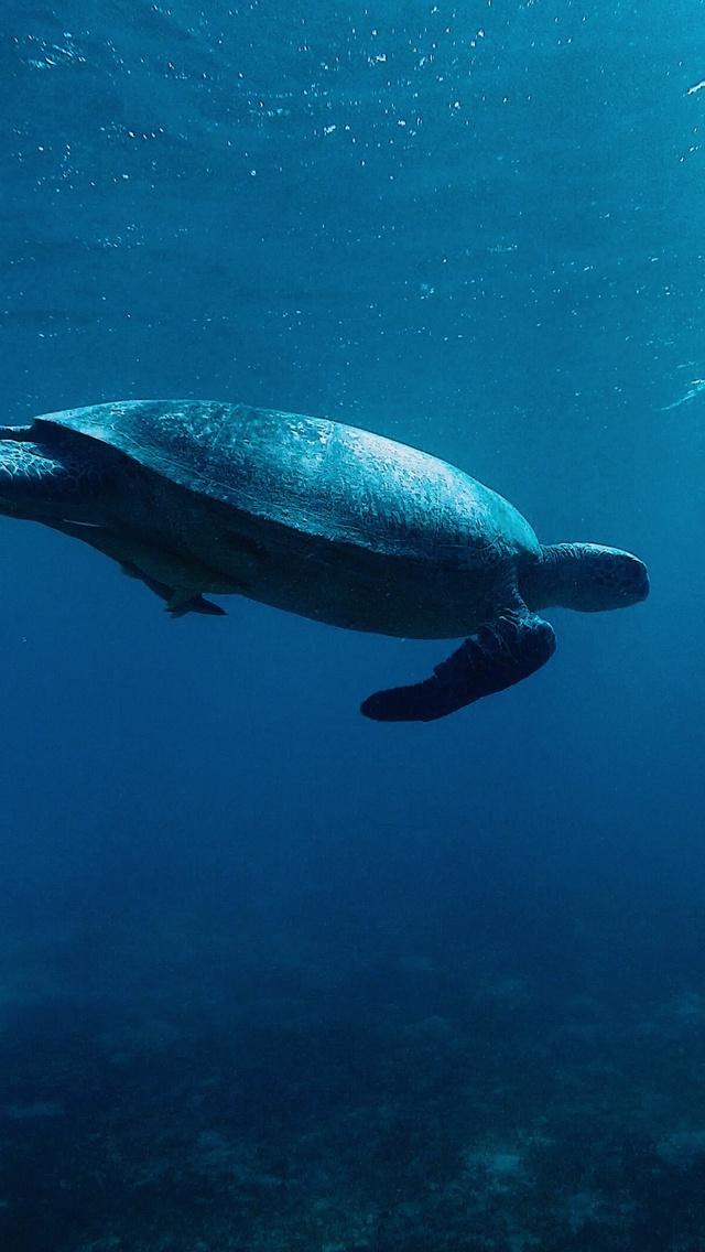 turtle-underwater-4k-sg.jpg