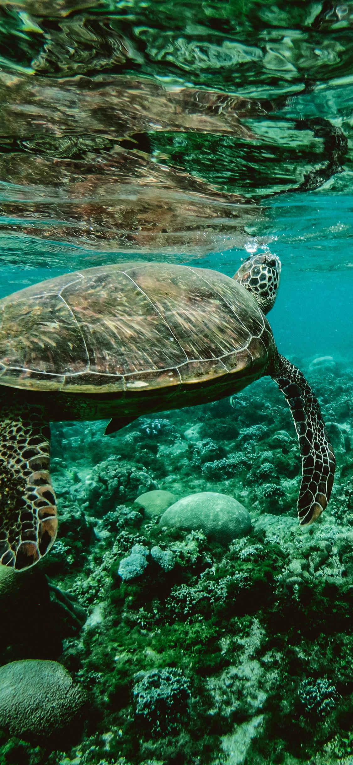 1125x2436 Turtle Underwater Iphone Xs Iphone 10 Iphone X Hd