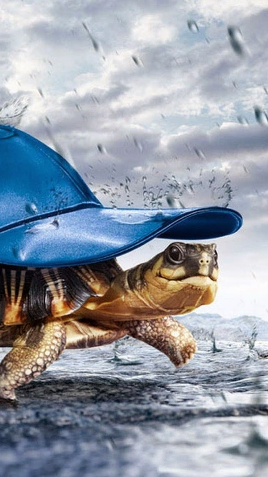 turtle-with-cap-raining-ql.jpg