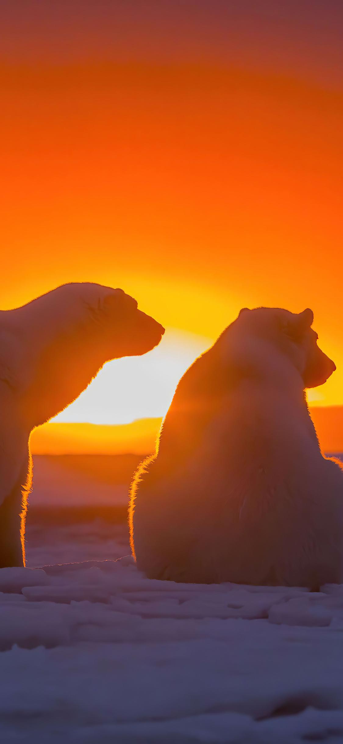 two-polar-bears-watching-sunset-4k-ir.jpg