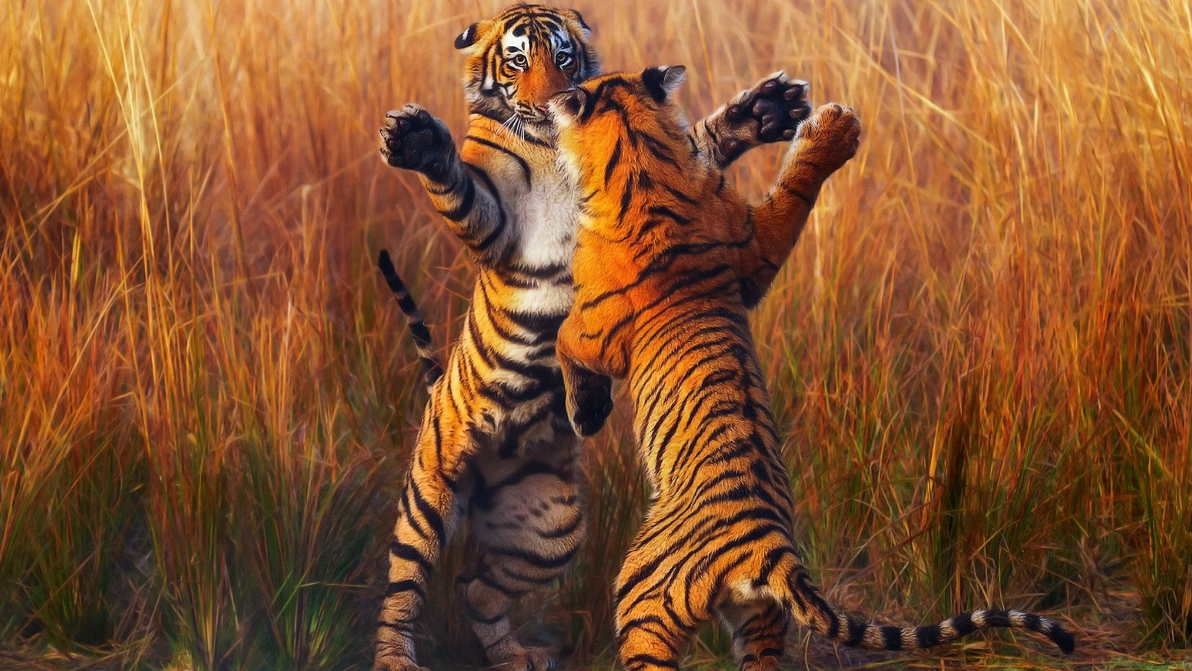two-tiger-fightining-b1.jpg