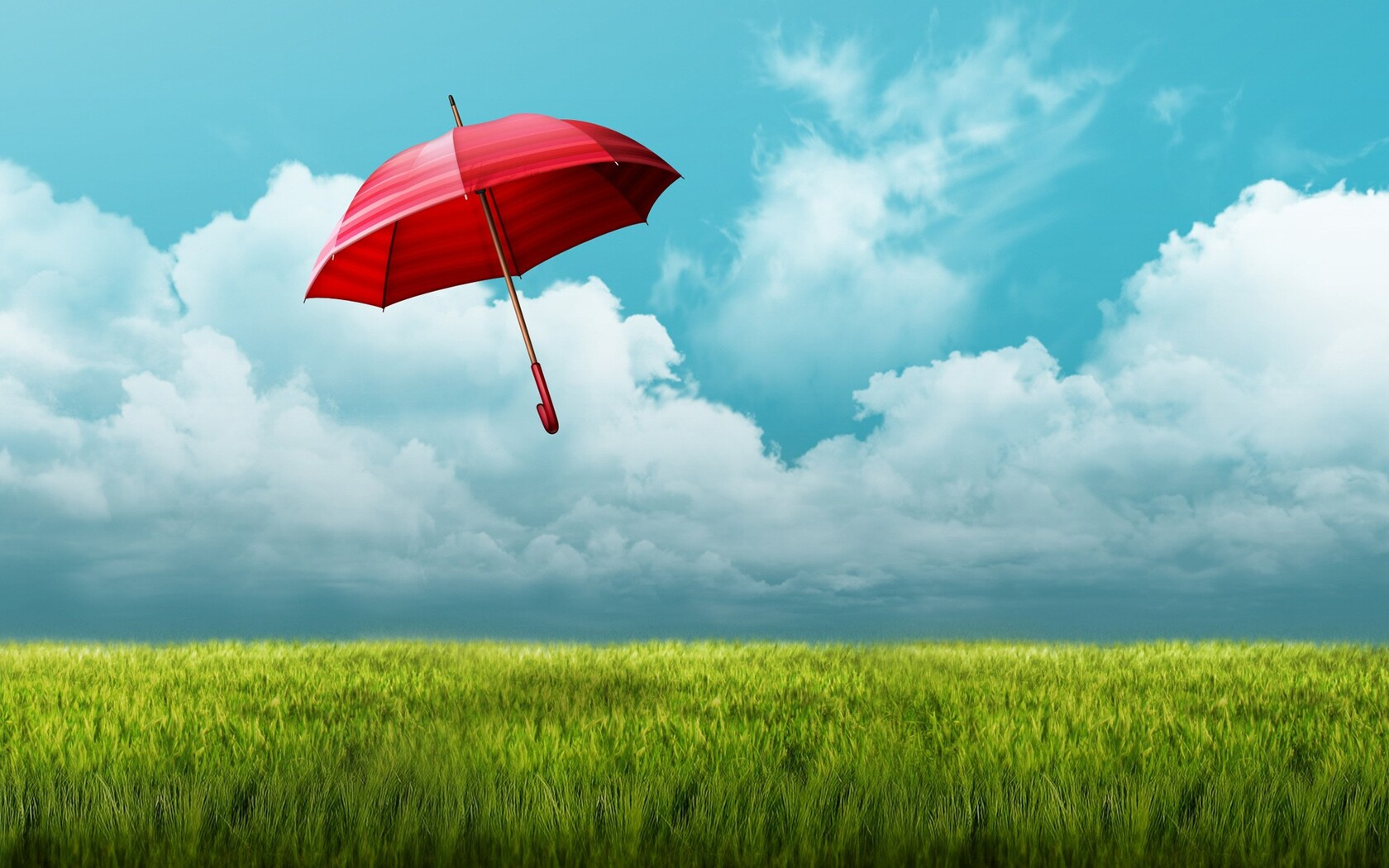 umbrella-fields.jpg