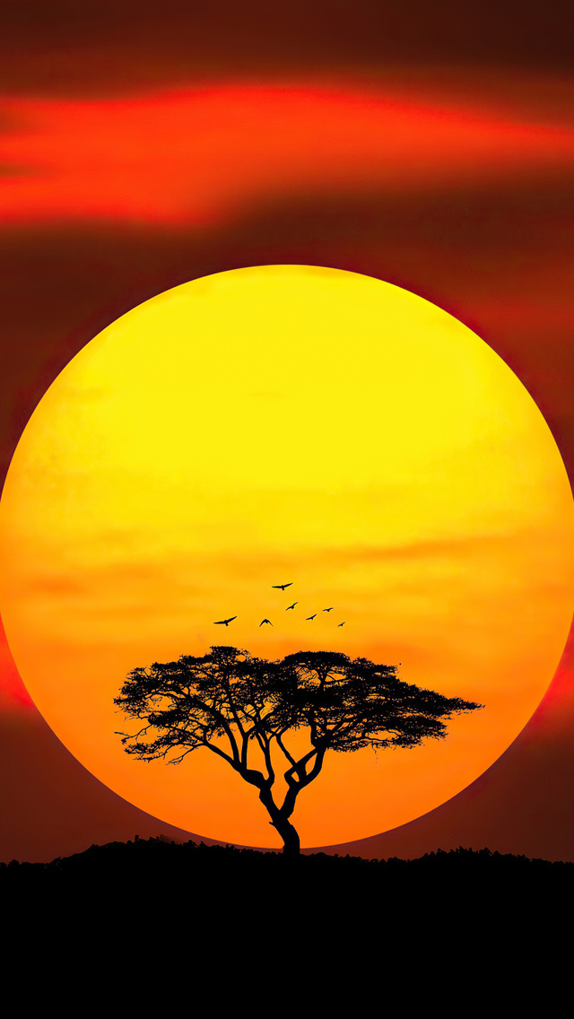 umbrella-thorn-sunset-4k-ec.jpg