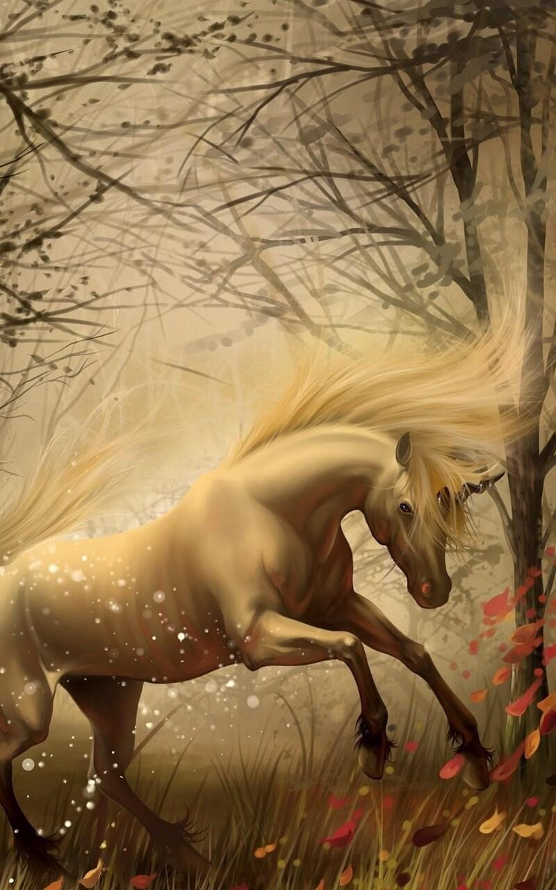 unicorn-in-dreams.jpg