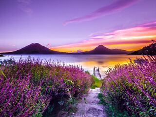 volcano-sunset-flower-purple-dreamy-landscape-4k-5k-yf.jpg
