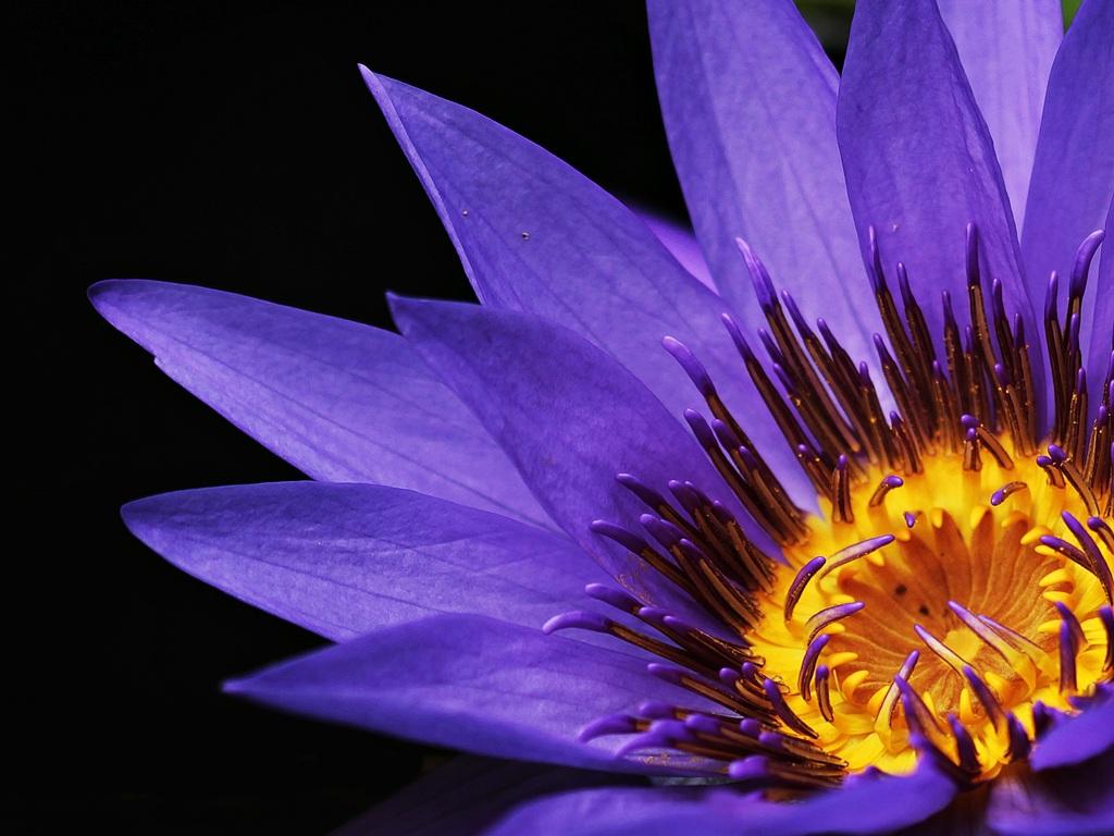 water-lilies-macro-photography-ne.jpg