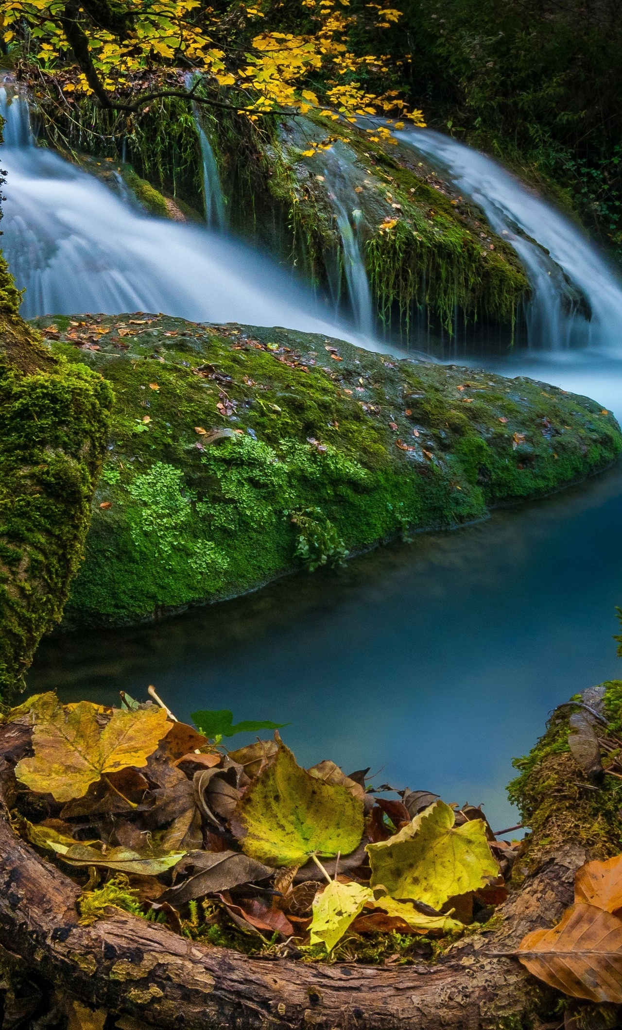 waterfalls-moss-foliage-5k-m0.jpg