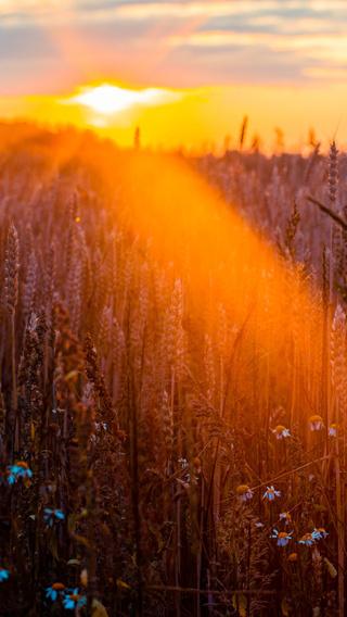wheat-field-sun-beams-photography-5k-5o.jpg