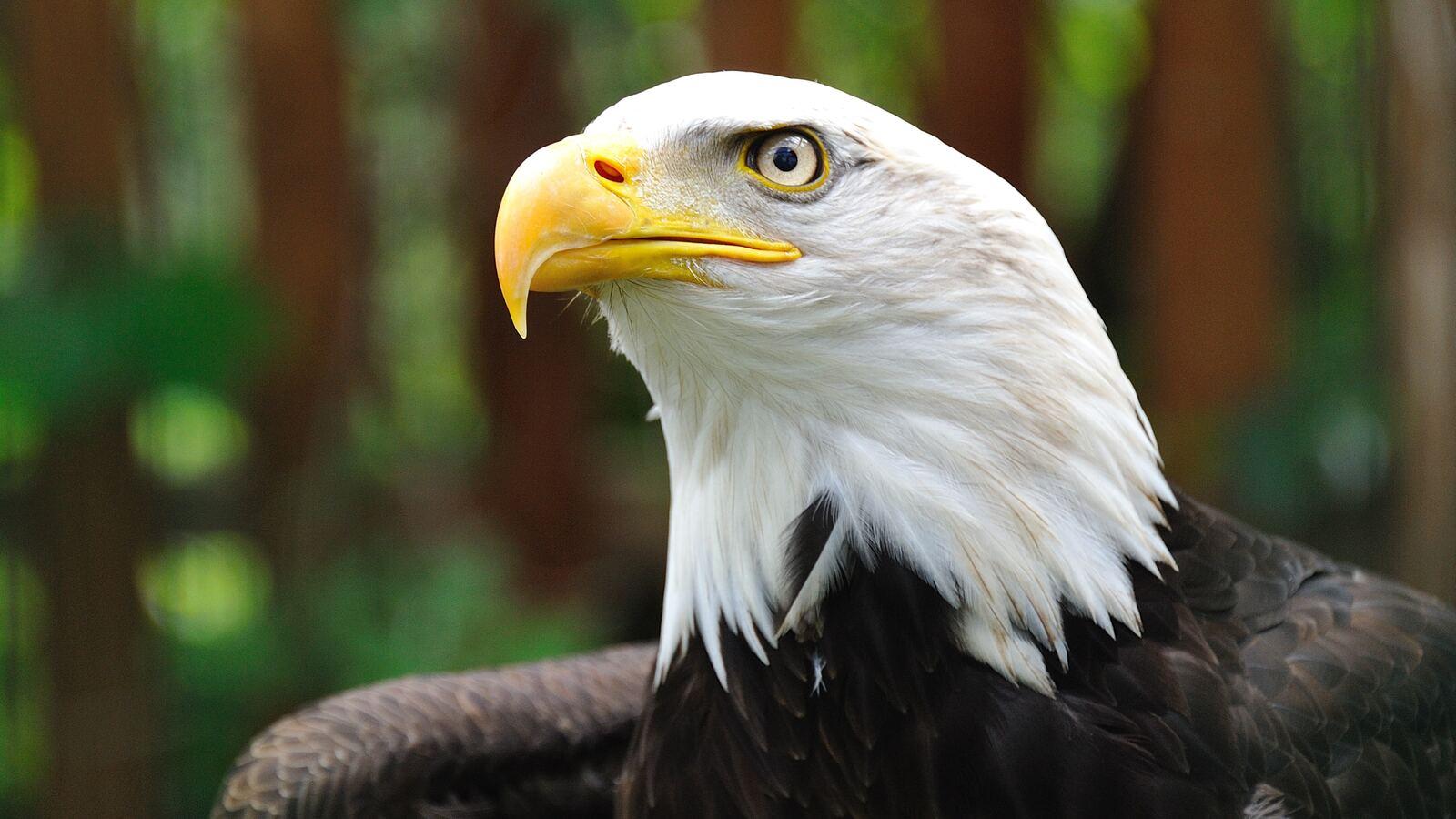 white-eagle-4k-3r.jpg