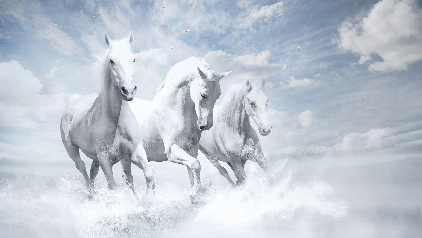 1360x768 White Horses Hd Laptop Hd Hd 4k Wallpapers Images Backgrounds Photos And Pictures