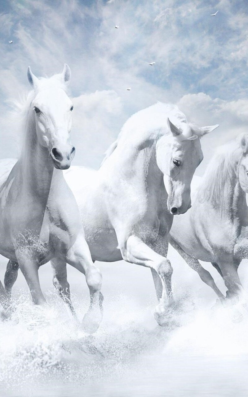 800x1280 White Horses Hd Nexus 7 Samsung Galaxy Tab 10 Note