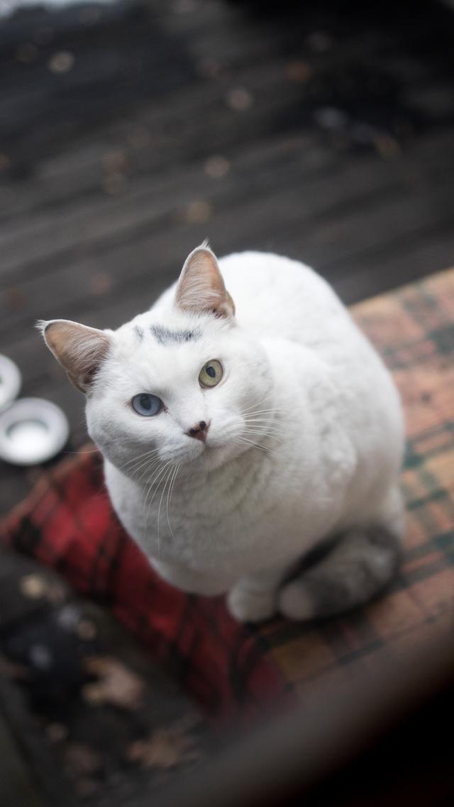 white-kitty-5k-jj.jpg