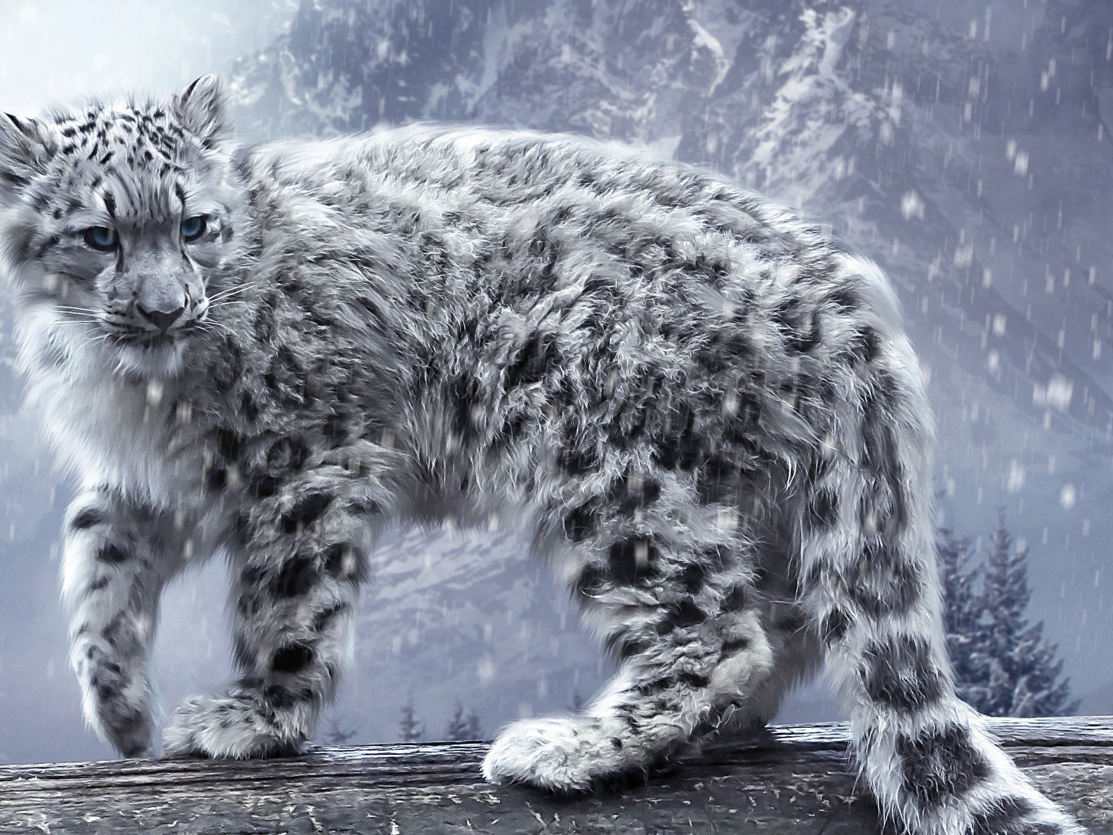 white-leopard-hd.jpg