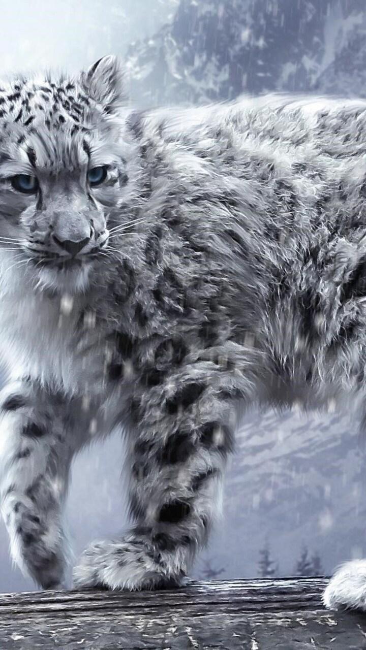 white-leopard-hd.jpg