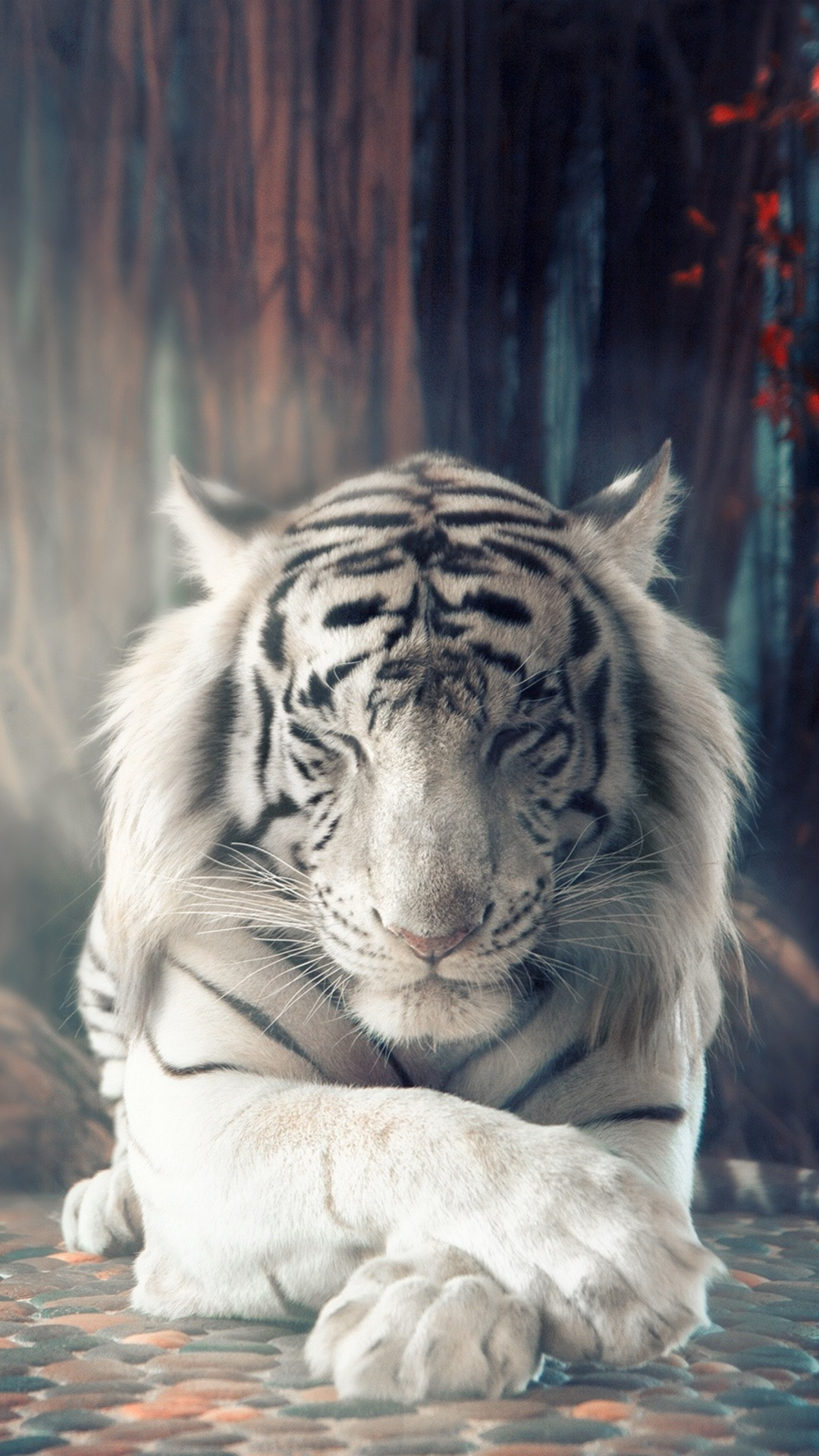 1080x1920 White Tiger Dreamy Iphone 7 6s 6 Plus Pixel Xl