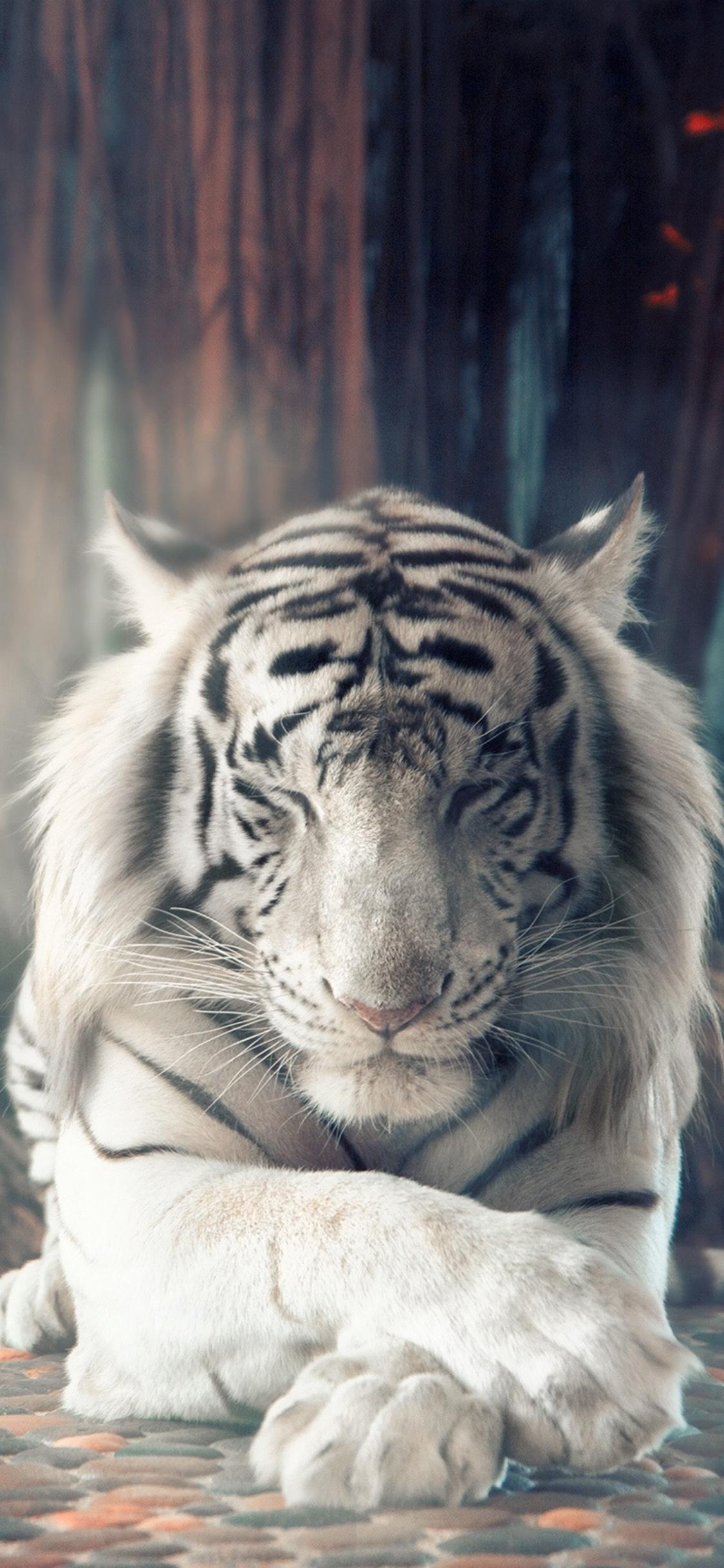 4k Wallpaper Iphone X Wallpaper 4k Tiger