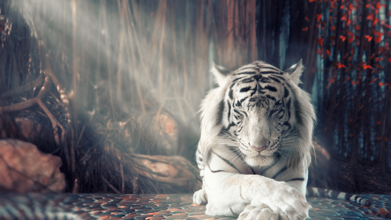white tiger dreamy ks