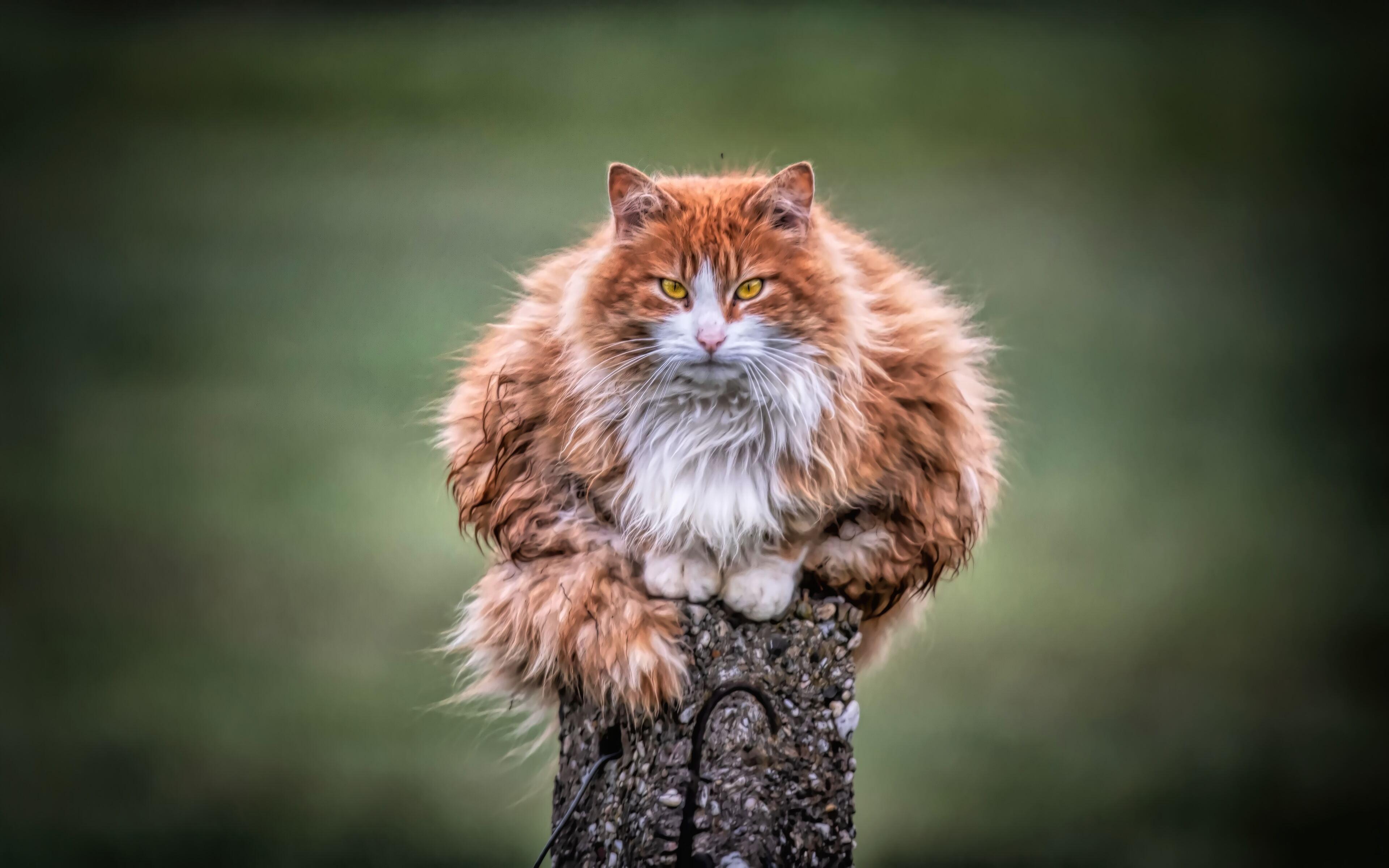 wild-cat-4k-s0.jpg