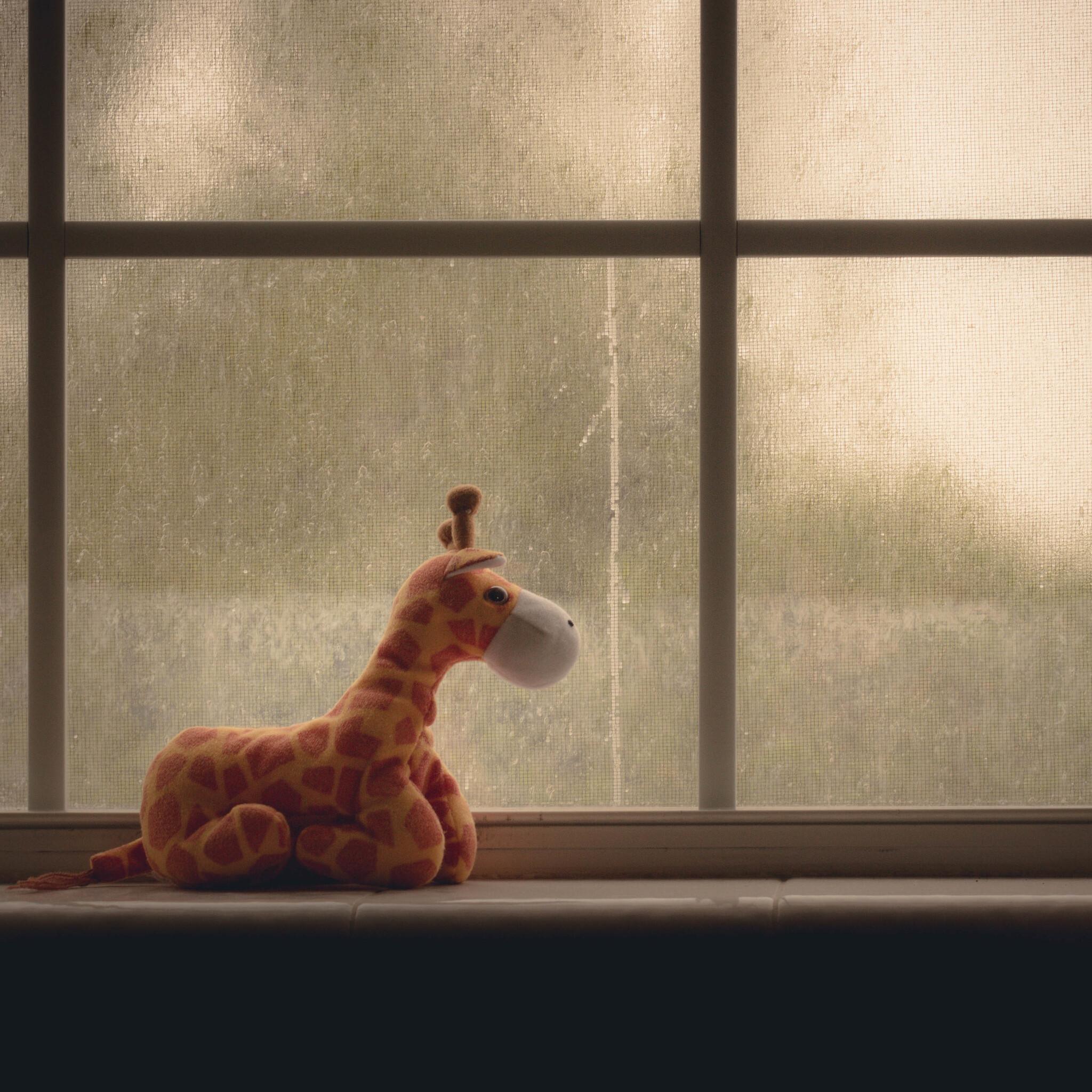 window-ziraffe-4k-42.jpg