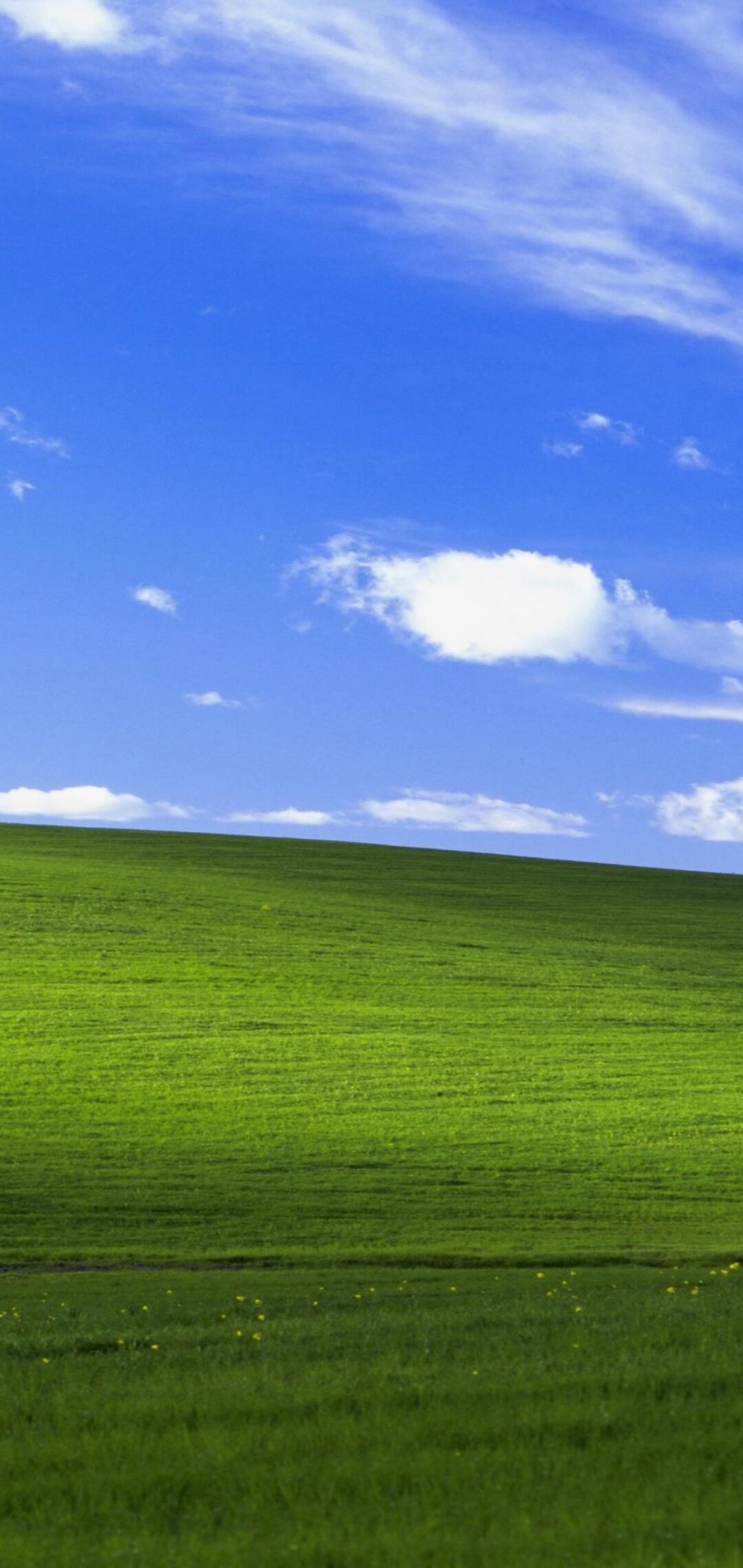 windows-xp-bliss-4k-lu.jpg