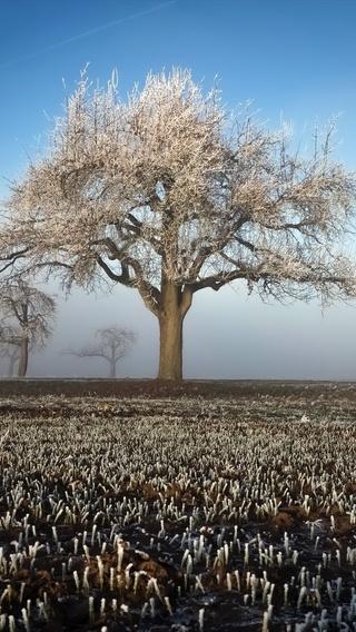 winter-field-landscape-trees-fs.jpg