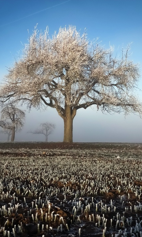 winter-field-landscape-trees-fs.jpg