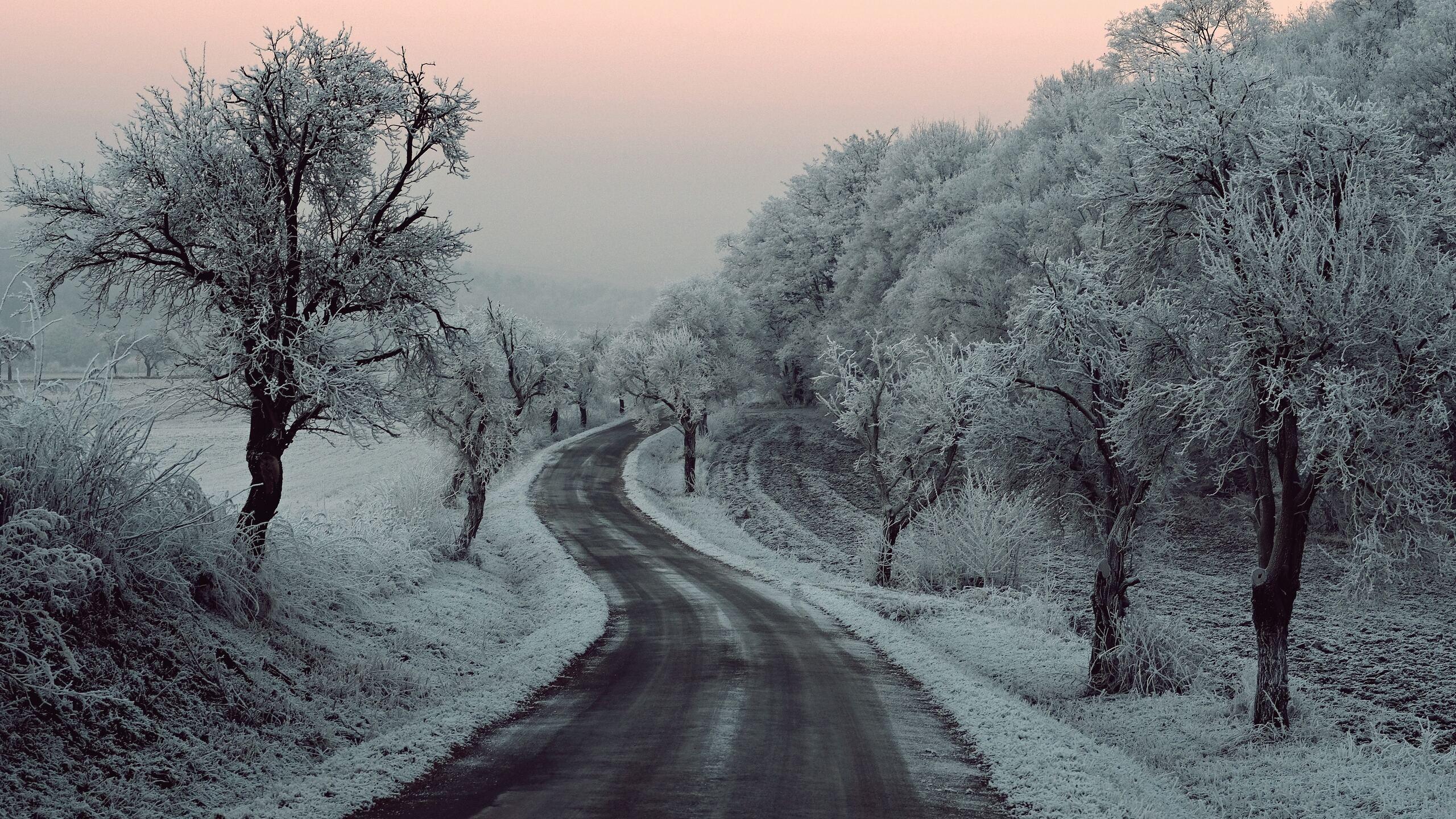 winter-road-snow-frozen-trees-on-sides-5k-27.jpg