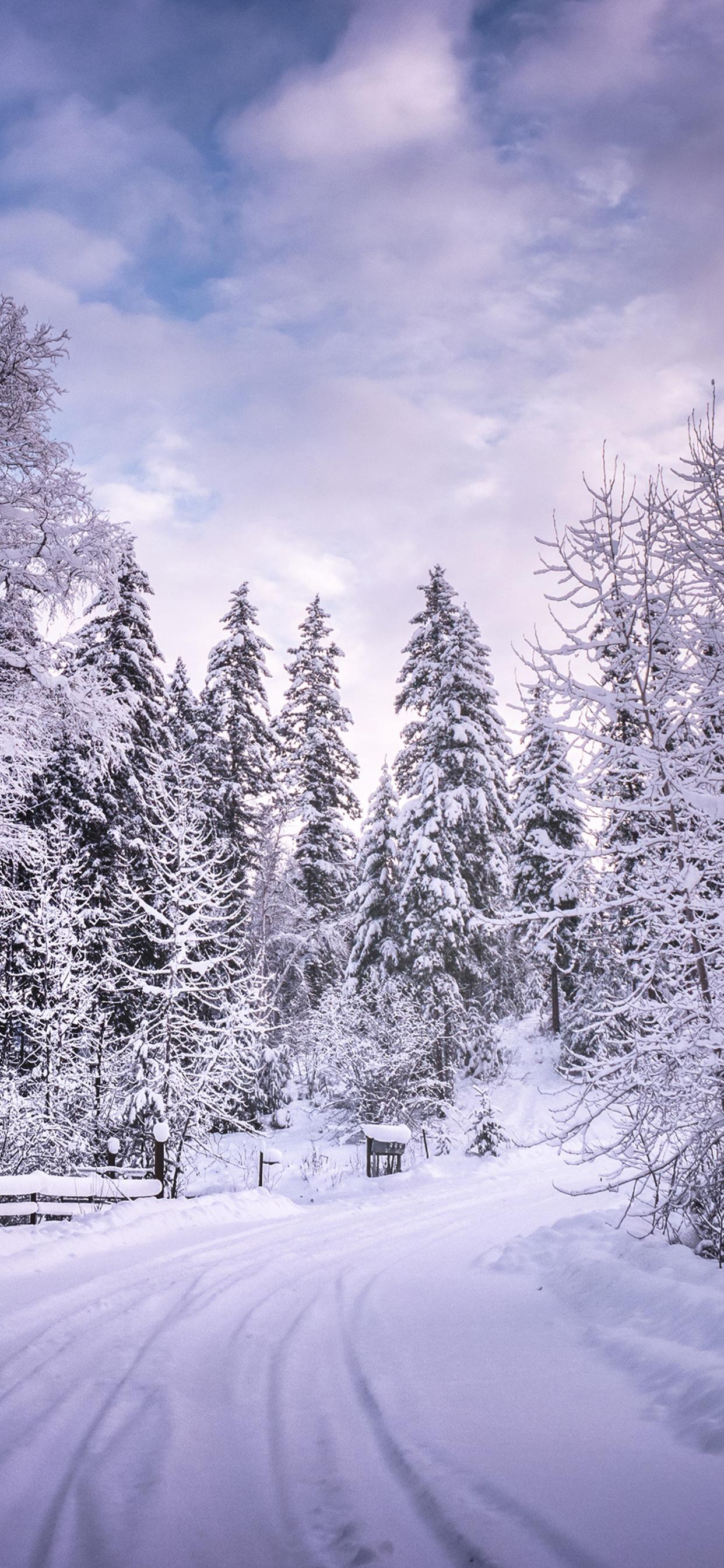 1242x2688 Winter Road Snow Trees White Iphone Xs Max Hd 4k