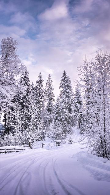 winter-road-snow-trees-white-d5.jpg
