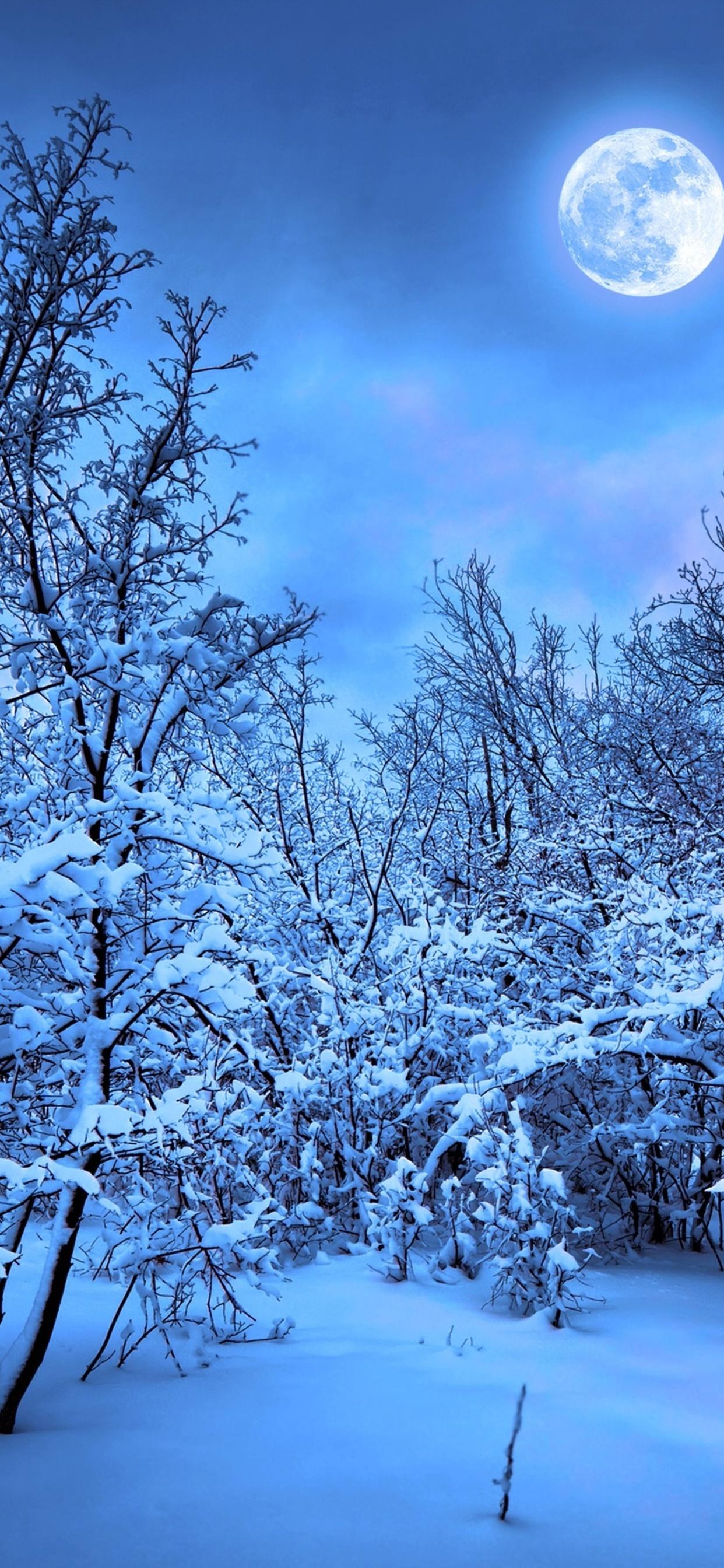 1242x2688 Winter Snow Nature 4k Iphone Xs Max Hd 4k