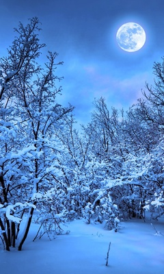 winter-snow-nature-4k-ej.jpg